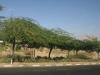 Израиль. Трасса в Эйлате