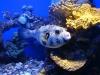 Эйлат. Океанариум. Подводный мир