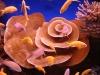 Эйлат. Подводный музей. Цветные рыбки и кораллы