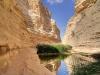 Израиль. Пустыня Негев. Оазис среди песчаных гор