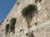 Израиль. Иерусалим. Стена Плача