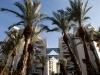 Ашдод. Пальмы и многоэтажки