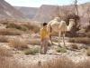 Эйлат. Ближневосточный верблюд