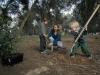 Израиль. Новый год деревьев - Ту би-Шват