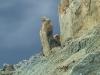 """Мертвое море. Соляной столб """"Жена Лота"""""""