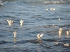 Мертвое море. Соляные столбики на воде. Легкое волнение